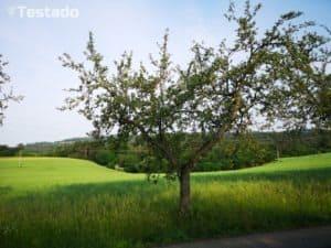 Huawei P20 Pro - fotografie