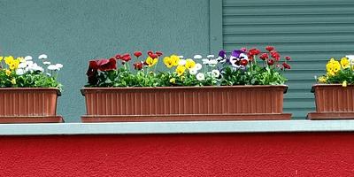Najlepšie samozavlažovacie kvetináče – test a recenzie 2019
